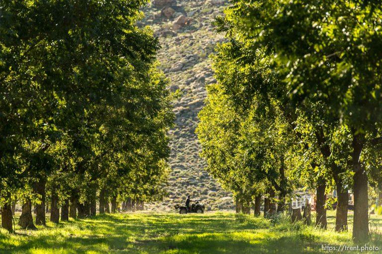 Southern Utah Pecan Ranch