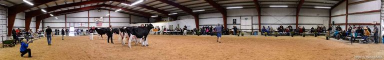 Western Spring National Cow Show