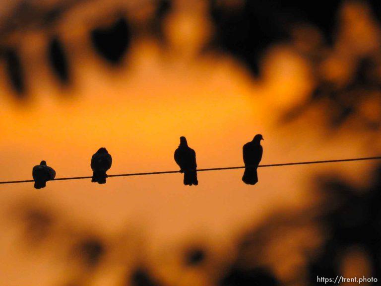 Sunset Wire