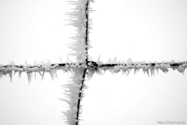 Frost Light +
