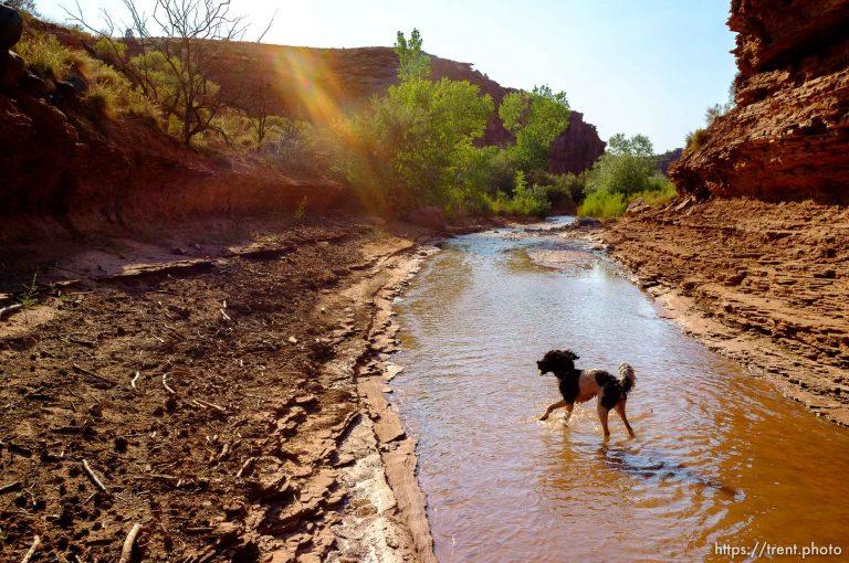Ruby at Sulphur Creek